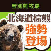 登別熊牧場,北海道棕熊強勢登場!